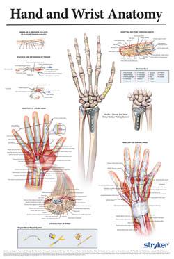 Stryker Hand Poster