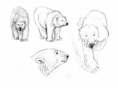 Rough Sketches of Polarity Bear #1