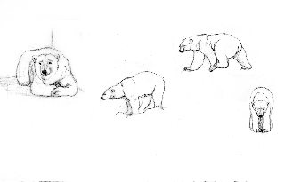 Rough Sketches of Polarity Bear #4